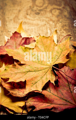 stack of fallen maple leaves - image for book cover - Stock Image