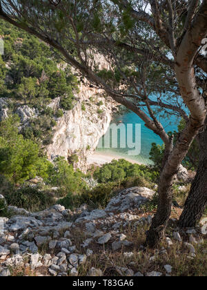 Pine trees and rocky coastline with view at small hidden beach on Adriatic sea coast in Croatia - Stock Image