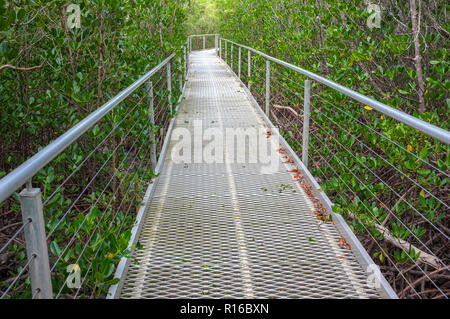 The East Point Mangrove board walk in the suburb of Darwin city in the Northern Territory of Australia. - Stock Image