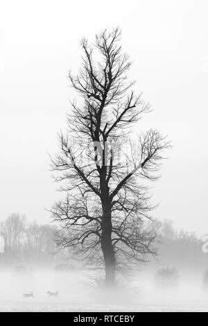 Dogs in the fog near a tree with snow - Stock Image