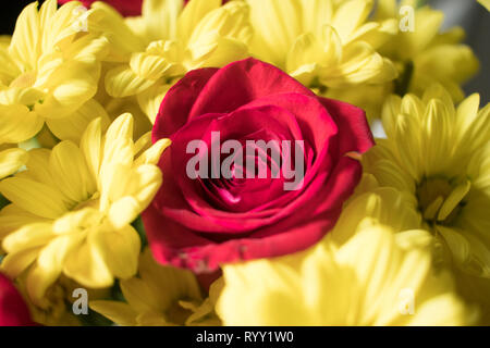 Bouquet of red roses and yellow flowers. - Stock Image