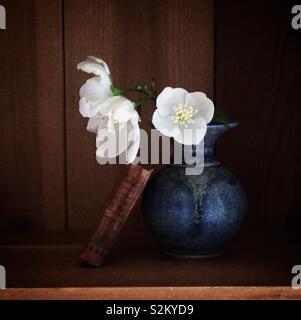 Orange Blossom in Small Vase - Stock Image