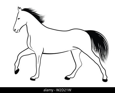 horse line art illustration - vector - Stock Image