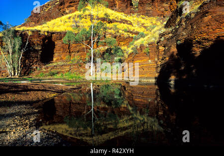 Red rock and landscape water reflections at Cathedral Pool, Wittenoom, Pilbara Northwest Australia - Stock Image