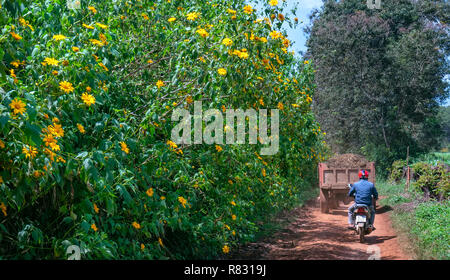 The farmers are driving a tractor at path of countryside, bush of wild sunflower bloom in yellow, colorful scene, beautiful nature - Stock Image