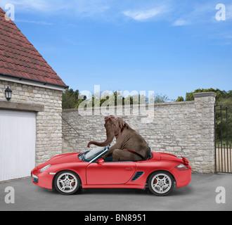 WILDSIDE elephants - Stock Image