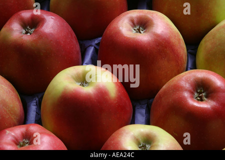 Braeburn apples red apples in close-up in apple tray - Stock Image
