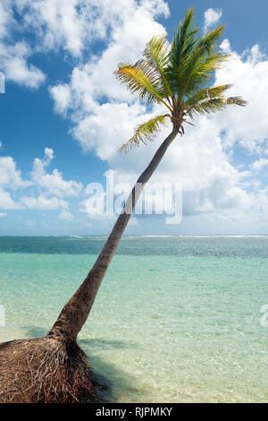 Coconut tree,  turquoise water and golden sand, Caravelle beach, Saint Anne, Guadeloupe, French West Indies. - Stock Image