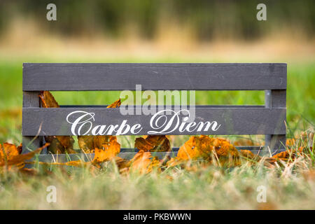 Wooden box with the phrase Carpe Diem in autumn nature - Stock Image