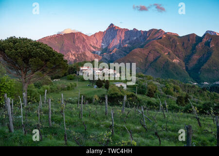Grape vines on the hilly slopes of Tuscany in Northern Italy - Stock Image