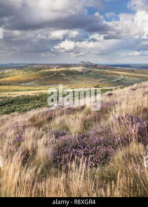 View from Rippon Tor to Haytor in Dartmoor National Park showing some heather in the foreground - Stock Image