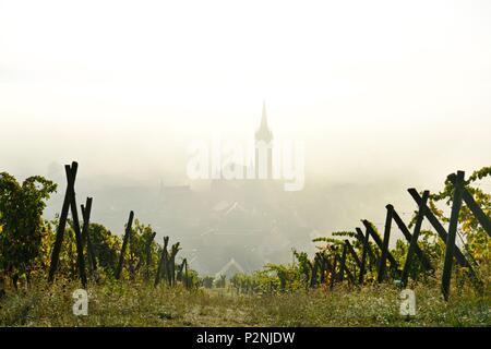 France, Bas Rhin, Alsace Wine Road, Dambach la Ville - Stock Image