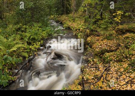 Small mountain river in Vindelfjällen nature reserve, Kungsleden trail, Lapland, Sweden - Stock Image