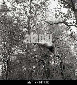 1960s, historical, an adventure scout wearing shorts and a woolley jumper using his hands and legs on a rope to manouver himself across a gap between two trees, England, UK. - Stock Image