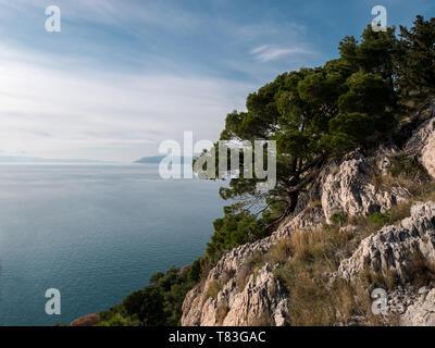 Pine trees on rocky coastline over calm blue sea on Croatian coast - Stock Image