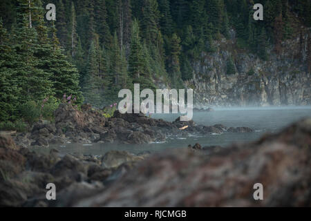 Kanada, British Columbia, Garibaldi Provincial Park, Lake Garibaldi - Stock Image
