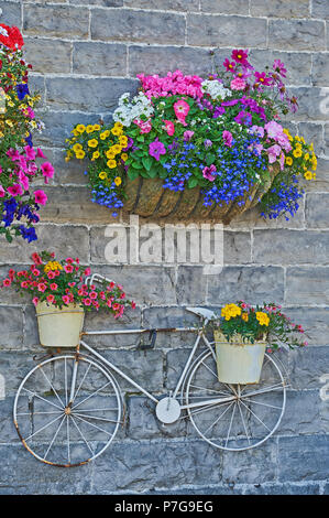 A bicycle hanging from the wall with colourful floral displays - Stock Image