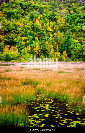 Autumn colors on The Tarn at Acadia National Park. - Stock Image