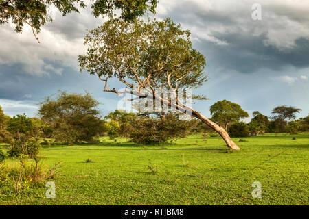 Savanna landscape, Tanzania, East Africa - Stock Image