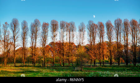 Moon over the trees illuminated by the Sun in autumn season with green meadow in foreground - Stock Image