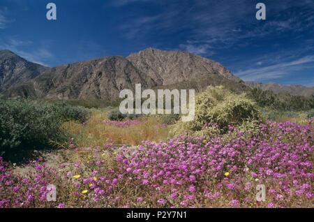Anza-Borrego Desert State Park, CA 980322_113 - Stock Image