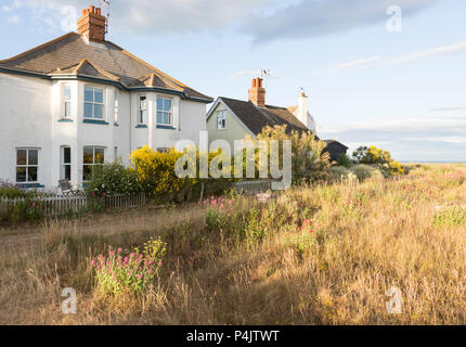 Houses next to the beach summer wildflowers on the SSSI at Shingle Street, Hollesley, Suffolk, England, UK - Stock Image