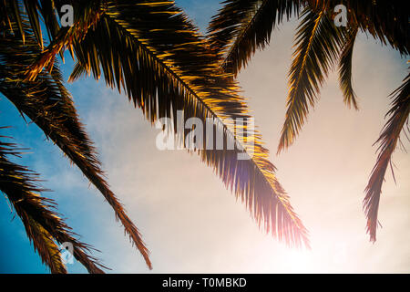 Palm tree leaves at sunset. Low angle view - Stock Image