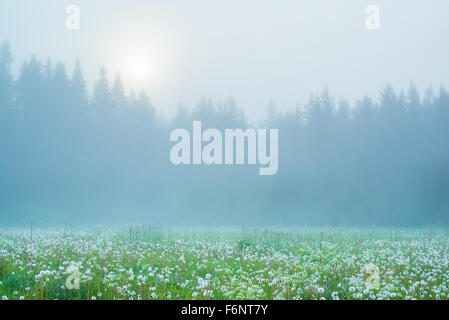 Misty summer meadow at the dawn - Stock Image