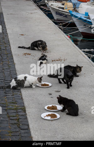 Stray cats being fed at waterfront in Canakkale, Mamara, Turkey - Stock Image
