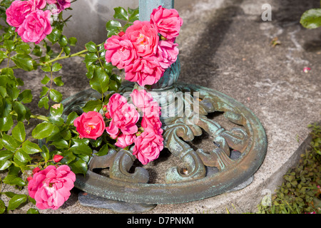 Pink floribunda rose spray at base of metal bird table on concrete path in sun. - Stock Image