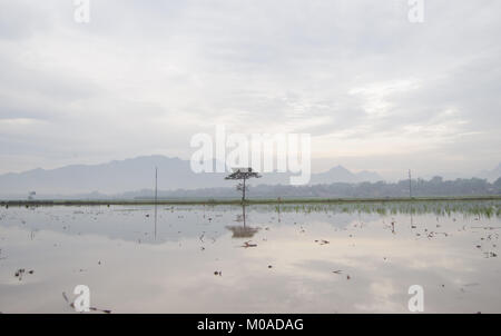 Morning landscape and mountain behind the fog. there is a single tree in the middle of the landscape. Tekol Indonesia. - Stock Image