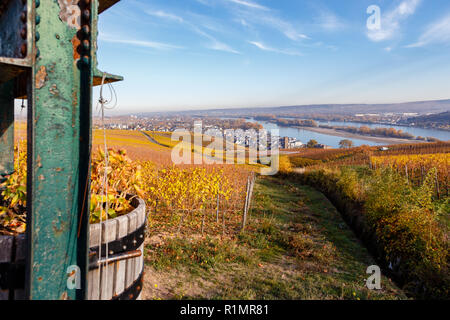Rüdesheim, Rheingau, Hesse, Germany. - Stock Image