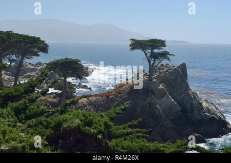 Lone Monterey cypress tree, Pebble Beach, California, USA - Stock Image