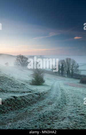 A frosty, misty dawn on Vartenham Hill, Milborne Port, Somerset, England, UK - Stock Image