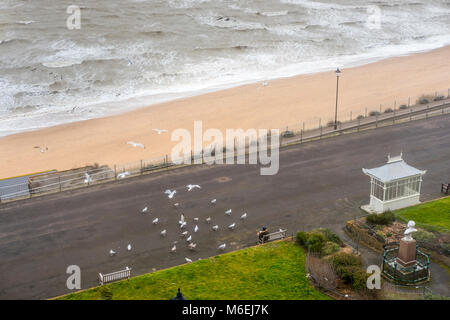 Victoria Parade, Ramsgate; feeding seagulls along the seafront during a cold February day. - Stock Image