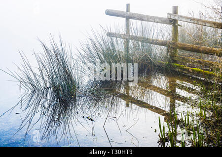 A misty Spring morning on one of the lakes at Cotswold Water Park - Stock Image