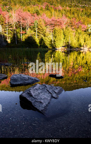 Colorful autumn foliage on the shore of Bubble Pond in Acadia National Park. - Stock Image