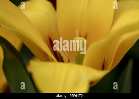 Flower can be considered in two parts: the vegetative part, consisting of petals and associated structures in the perianth, and the reproductive or se - Stock Image