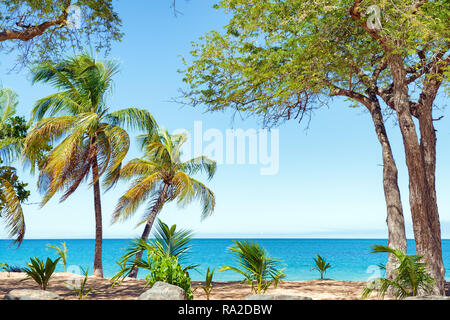 Coconut trees, golden sand, turquoise water and blue sky, pearl beach , Guadeloupe, French West Indies - Stock Image