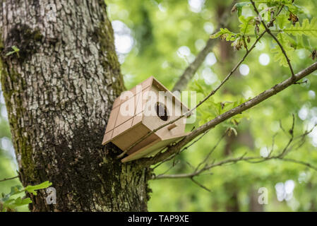 Handmade nest hangs on tree.Handmade wooden birdhouse on a tree for bird protection.Spring scenery with bird nesting box on a tree - Stock Image