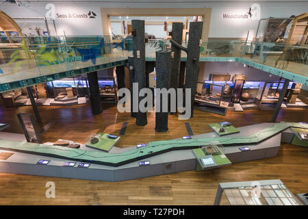 Newcastle-upon-Tyne, NE England city. The Great North Museum, formerly the Hanock Museum and Hatton Gallery. - Stock Image