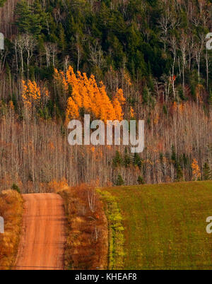 Country dirt road and array of autumn colors in Kings County, New Brunswick, Canada. - Stock Image