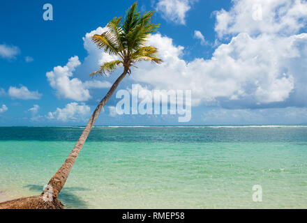 Palm tree falling in the turquoise water of  Caravelle beach, Saint Anne, Guadeloupe, French West Indies. - Stock Image