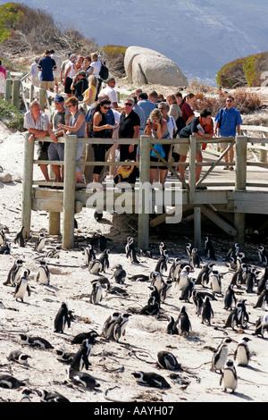 SA simon s town boulders beach jackass penguin colony viewpoint tourists - Stock Image