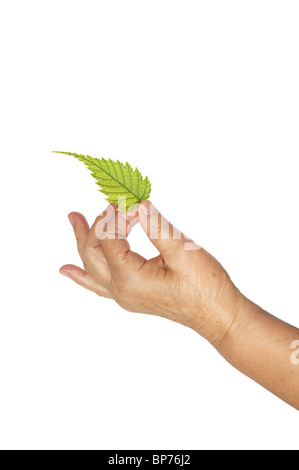 Mature hand and fresh leaf - Stock Image