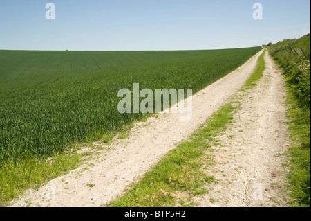 Track in Wilshire field, Wiltshire, UK. - Stock Image