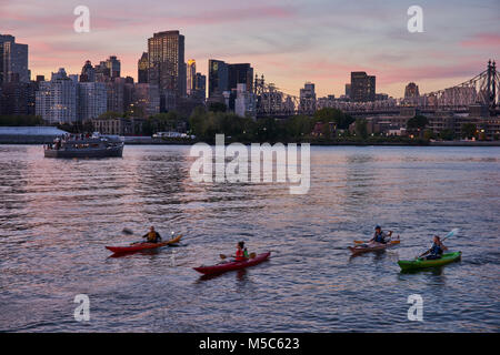 Kayaks paddling south  in the East River by the Gantry State Park, while the East River Ferry is going North to - Stock Image