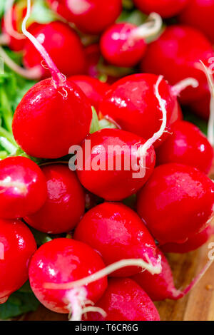 Bunches of washed fresh red radish, new harvest close up - Stock Image