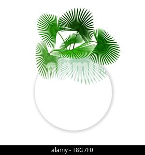 Green tropical leaves Palm In a circle place for Ads, Advertising. illustration - Stock Image
