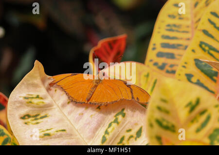 Images of orange butterfly in garden setting - Stock Image